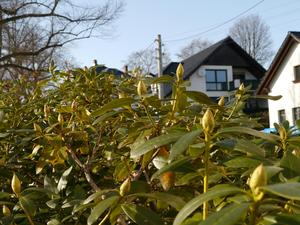 Gfr01 W T in Gartenfruehling