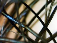 Haare01 T in Unter dem Mikroskop