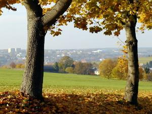 Herbst15 T in Herbstfarben