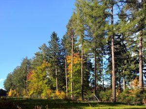 H02 01 17 W-300x225 in Etwas Herbst