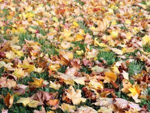 H05 01 17 W-300x225 in Etwas Herbst
